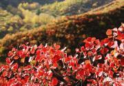 畅游京西门头沟 饱览万山红叶飘