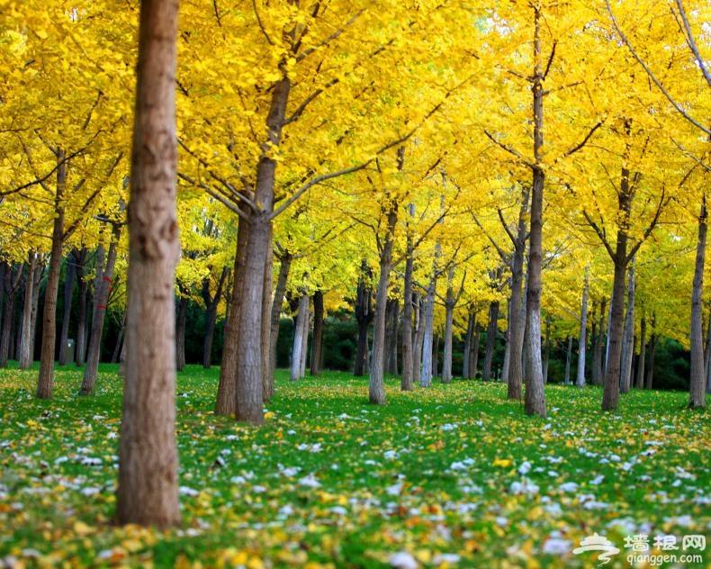 奥林匹克森林公园迎来彩叶观赏季[墙根网]
