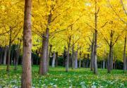 奥林匹克森林公园迎来彩叶观赏季