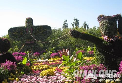 """北京植物园菊花文化节 """"菊海花田""""赏秋花[墙根网]"""