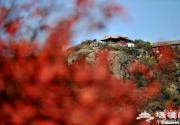 霜叶红于二月花 北京香山迎来赏秋高峰