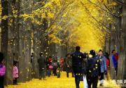 北京11月份去哪玩 金秋赏彩叶享受最纯正的大自然美景