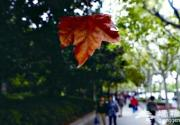 秋季上海 盘点最美的沪上秋景