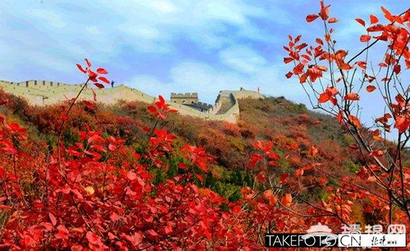 八达岭红叶节落幕仅剩两天 本周末仍是最佳观赏期