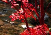北京秋天去哪玩? 周边自驾游赏四色之秋
