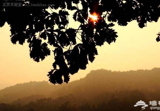 昌平看红叶的地方 银山塔林风景区