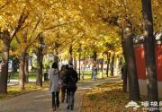 日坛公园 CBD商圈周边赏银杏