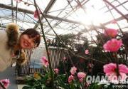 2014世界花卉大觀園梅花展開幕 冬季賞梅好去處