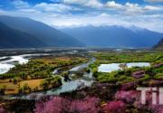 2014西藏林芝桃花节将于3月26日开幕
