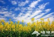 2014上海春季赏花地图全攻略