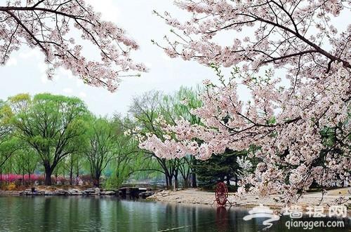 玉渊潭公园樱花节拍摄全攻略