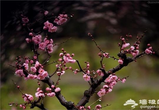 观景赏花烧烤 京郊5个踏青好去处