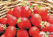 和草莓来场美丽邂逅 早春长沙周边采摘攻略