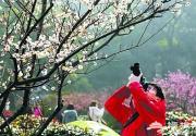 2014年北京去哪赏梅?目的地及攻略
