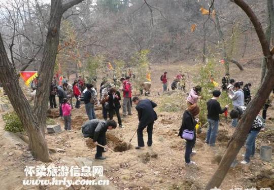 2014灵慧山植树节植树造林活动