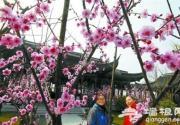 首届上海梅花节将在上海海湾国家森林公园举行