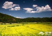 三月四月京郊游攻略 春季北京賞油菜花好去處