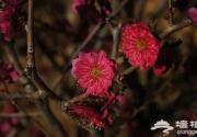 2014北京春天赏花摄影攻略