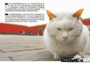 揭秘故宫神秘员工猫保安 部分为皇帝宠猫后代