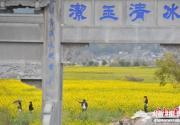云南百年侨乡和顺古镇春暖花开迎游客