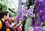 北京植物园花展 女游客免费领盆栽