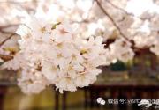 北京春游去哪里看花?北京踏青赏花好去处全攻略