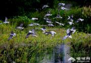 2014京郊春游去观鸟 京郊观鸟地攻略指南