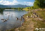 延庆野鸭湖 春季观鸟踏青第一站