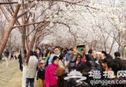 2014天津桃花节首个周末迎8万名游客