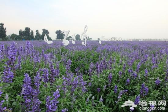 漫步在紫色的海洋之紫谷伊甸园