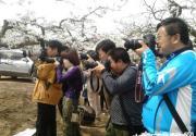 2014保定曲阳第三届梨花节开幕 打造特色文化旅游