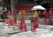 2014潭柘寺首屆玉蘭節將于4月9日開幕