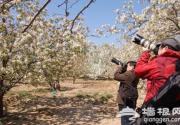 北京四月、五月赏花好去处 京郊踏春赏花游