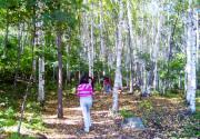 2014北京喇叭沟门原始森林公园游玩攻略