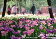 2014石家庄植物园郁金香文化节开幕