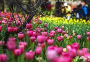 2014北京四月份各区县景区旅游活动汇总