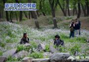 2014圆明园第十九届踏青节开幕