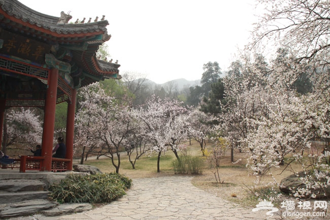 五一香山去赏花 2014北京香山公园山花节