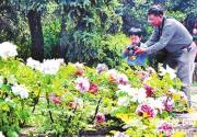 北京植物园牡丹文化节 赏花 听戏 过节