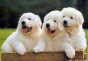 带着宠物去旅行 平谷乐和仙谷去撒欢