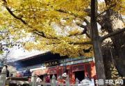 北京端午节祈福好去处 周边古寺进香游玩指南
