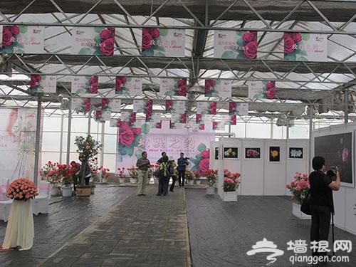 2014北京纳波湾月季文化节时间看点及交通[墙根网]