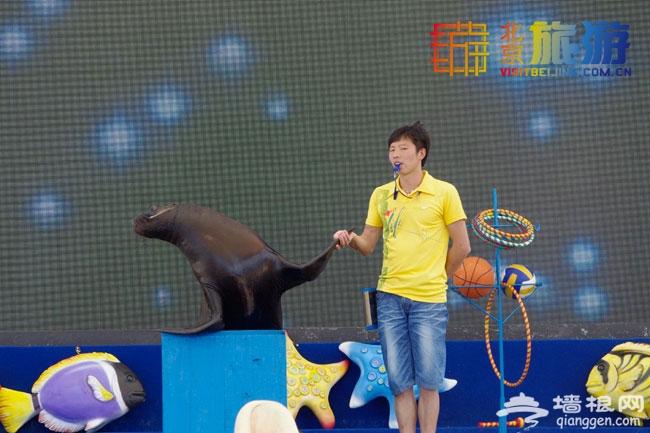 2014朝阳公园北京海洋沙滩狂欢节(开放时间+门票价格+活动亮点+交通)