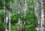 走进喇叭沟原始森林 享受避暑休闲之旅