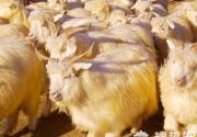 烤全羊是怎么做出来的?绝对让你震惊的大揭秘