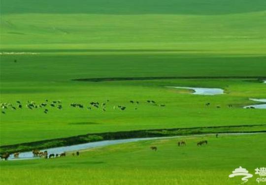 避暑在康西草原 感受蒙古风韵