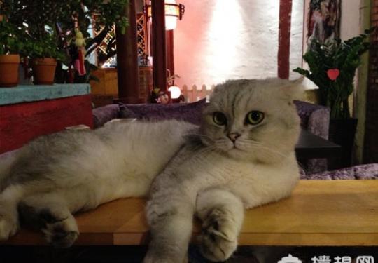 北京特色餐厅推荐 猫咪餐厅喵星人餐厅大盘点