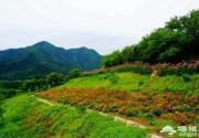 秋天北京哪里好看 延庆四季花海