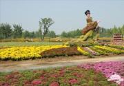 2014北京国际鲜花港菊花展9月19日开幕