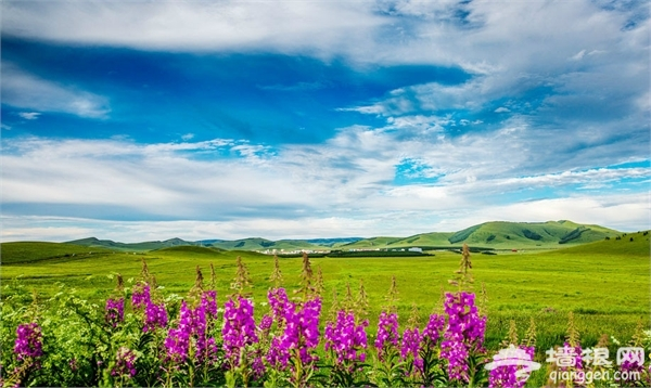 乌兰布统草原图片